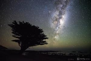 Tree Under the Stars